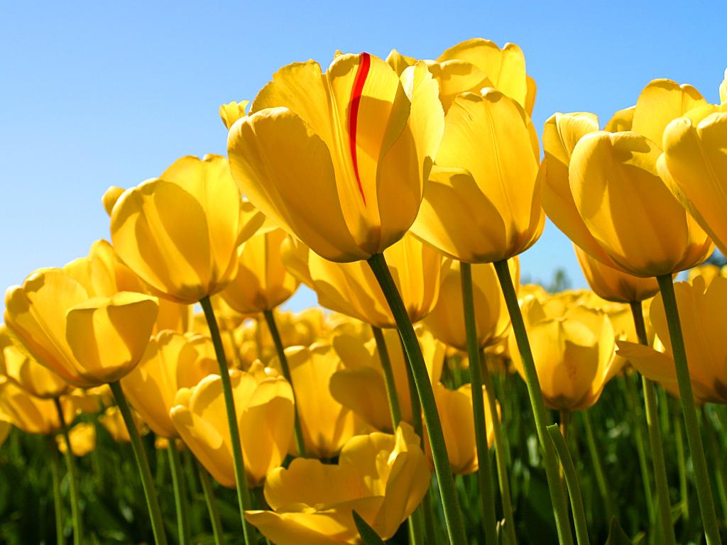 http://www.zbps.hlc.edu.tw/uploads/tadgallery/2009_03_12/16_Tulips.jpg Photo Test.